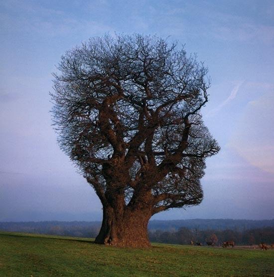 Mindfulness in 'het groen'